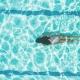 5 beneficios de la natación - 5 benefits of swimming